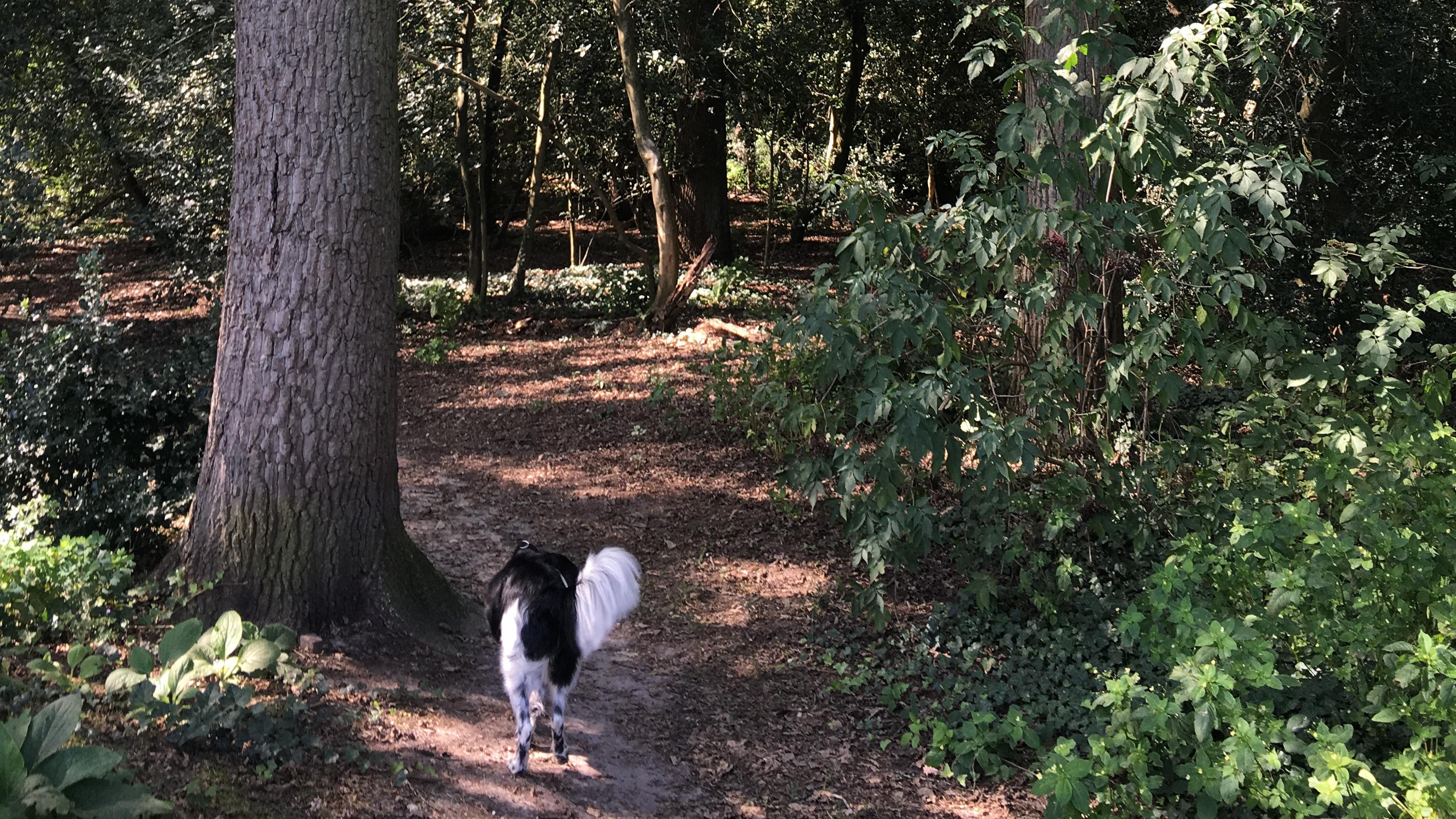 bosbaden-wandelen-met-de-hond-in-het-bos